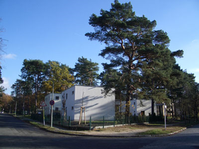 Ersatzpflanzung von Großbäumen, Kronenpflege (Totholzschnitt)